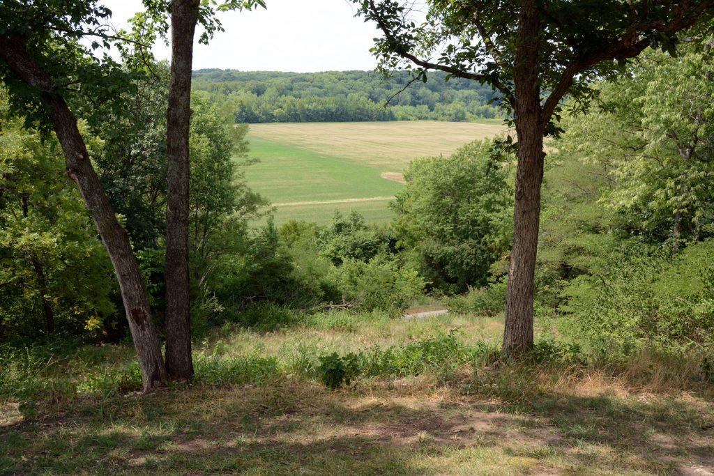 Dos árboles enmarcan una vista de árboles, arbustos, dos campos y un bosque