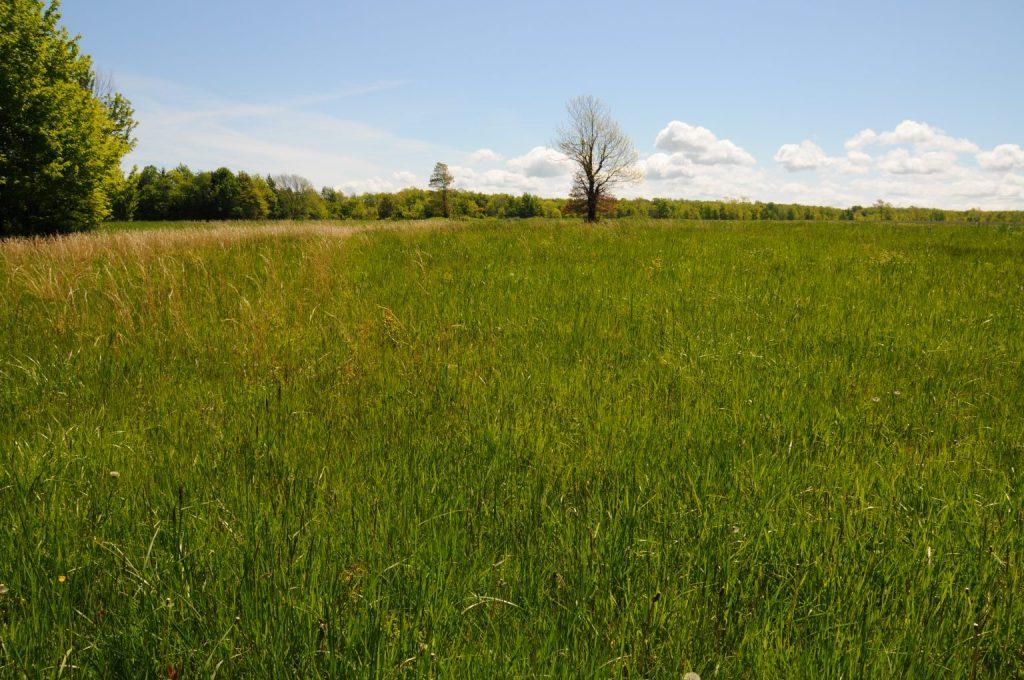 Un campo de hierba con algunos árboles al fondo.